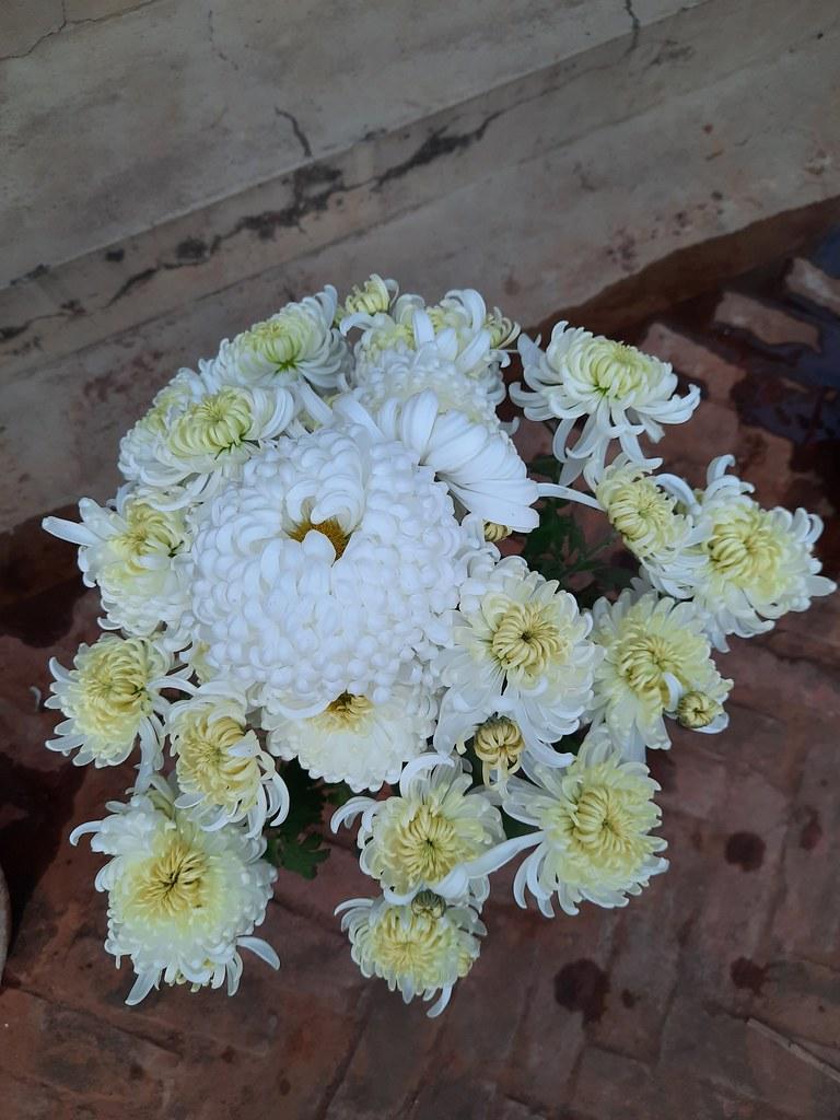 Vidyapith Flowers (44)