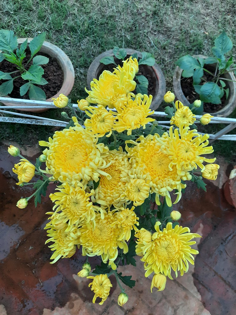 Vidyapith Flowers (45)