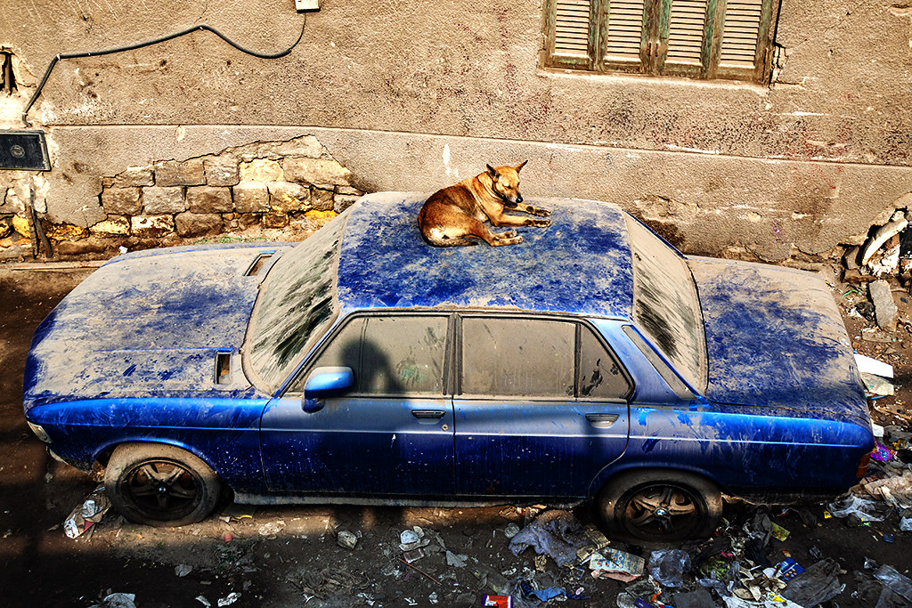 Dog on dusty car on 1-3-21--Cairo