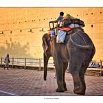 Eléphant sur fond coloré