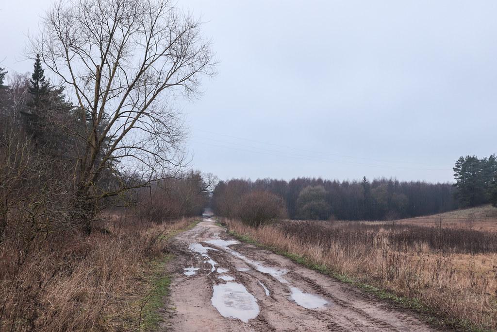 Просёлочная дорога около д.Белогруда