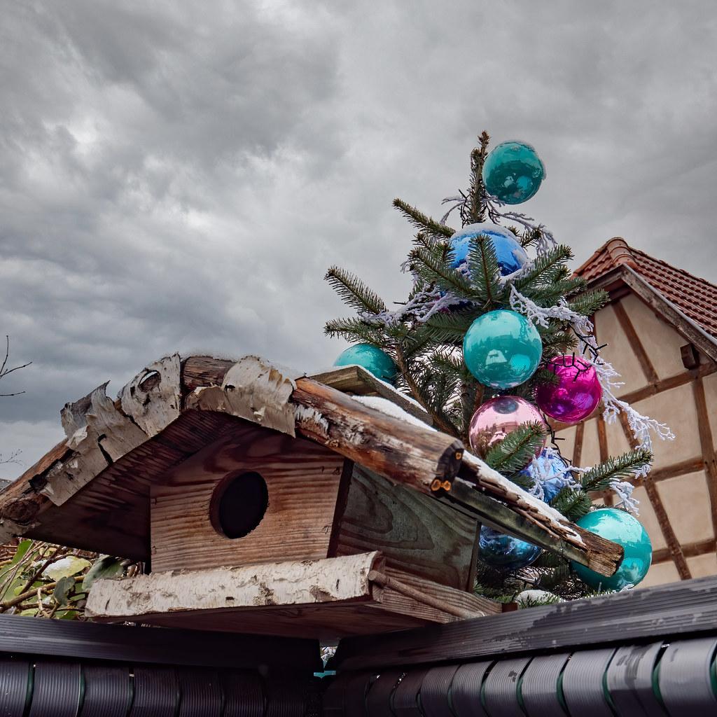 La maison des oiseaux du Père Noël... 50799631378_22e3688cae_b