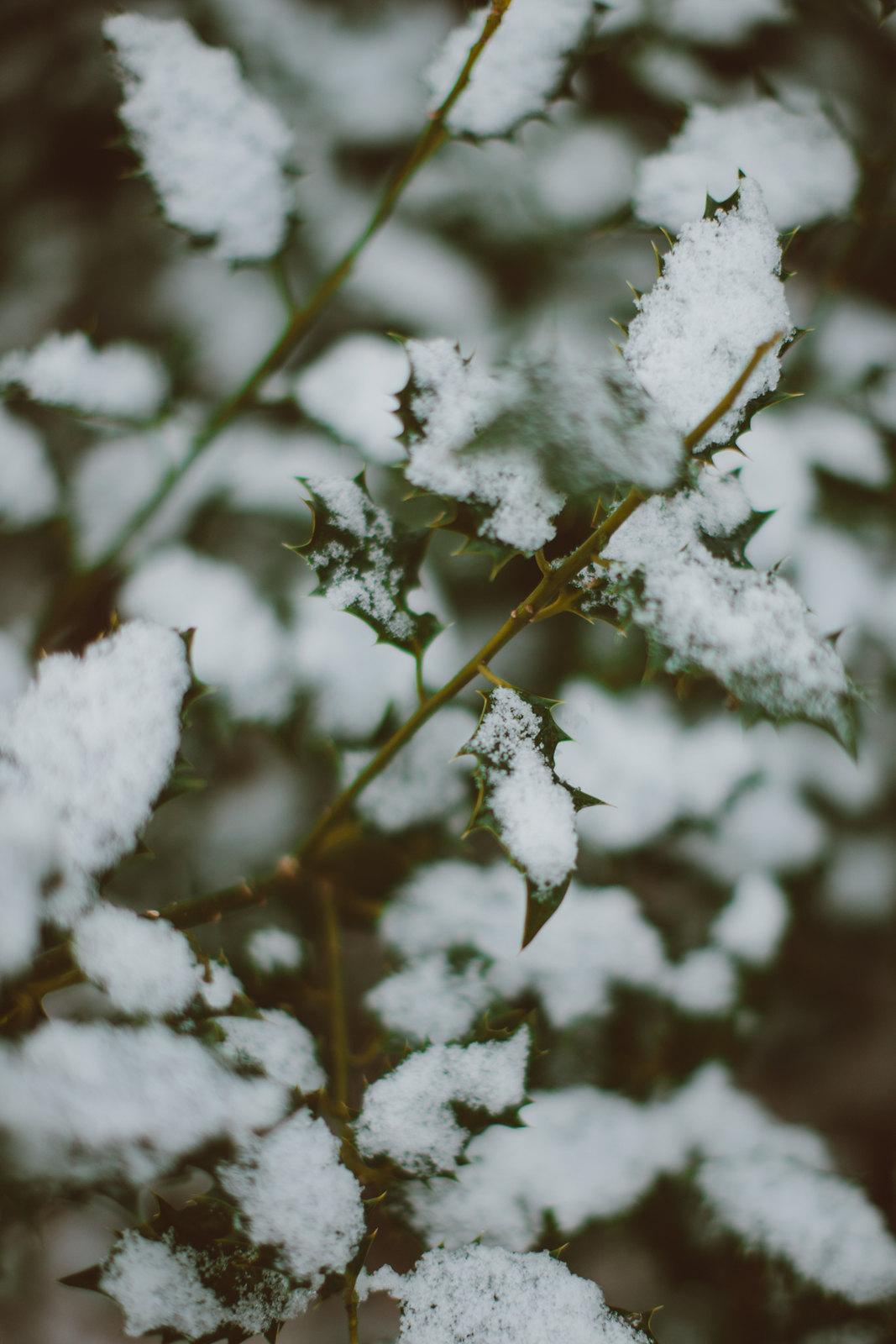 snowoods-1-9