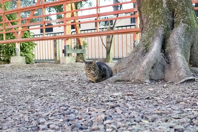 Today's Cat@2021−01−04