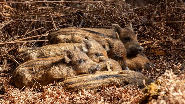 Humbug huddle
