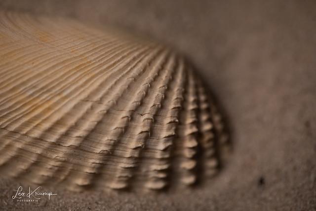 Seahell | Schelp