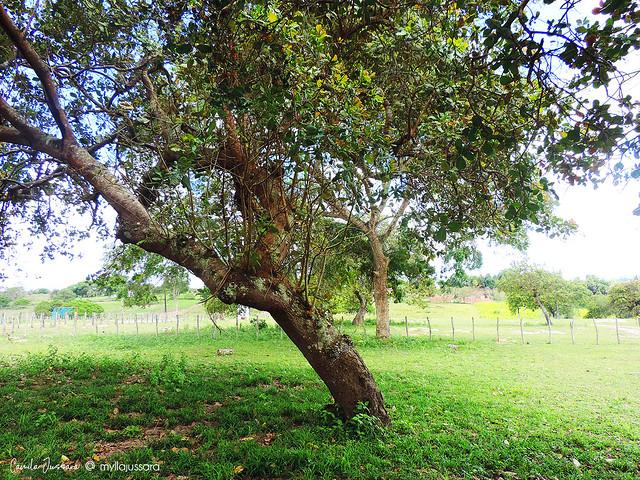 Fazenda Murundú, Aramari/BA