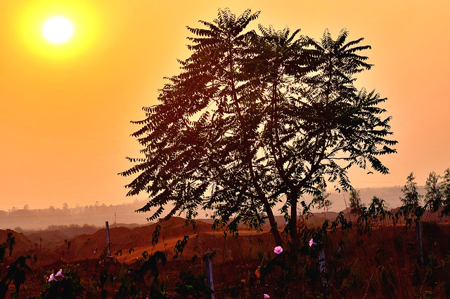 As the sun sets, the lone tree stands tall besides the red soil landscape!