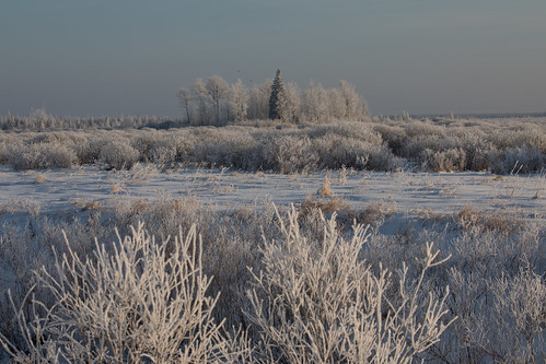 Magical wintry morning at the bog