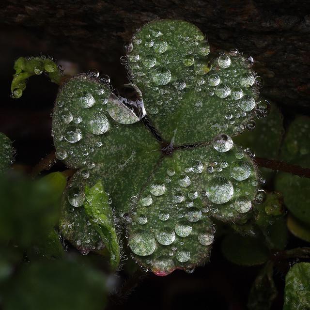 Rainy Day in the Backyard - 4