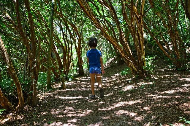 Diego na floresta vermelha