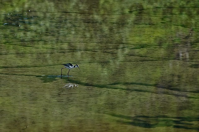 Pássaros na lagos