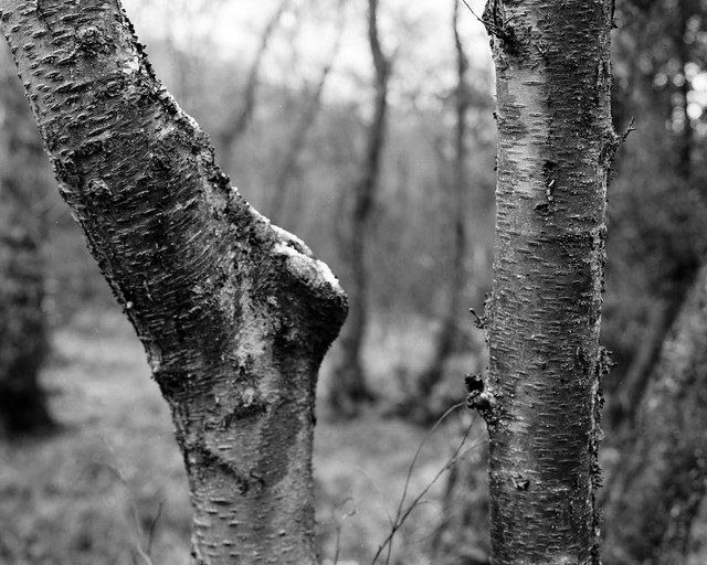 Hyons Wood, Walker Titan SF with Rodenstock 150mm, Rollei Ortho 25+ in HC110