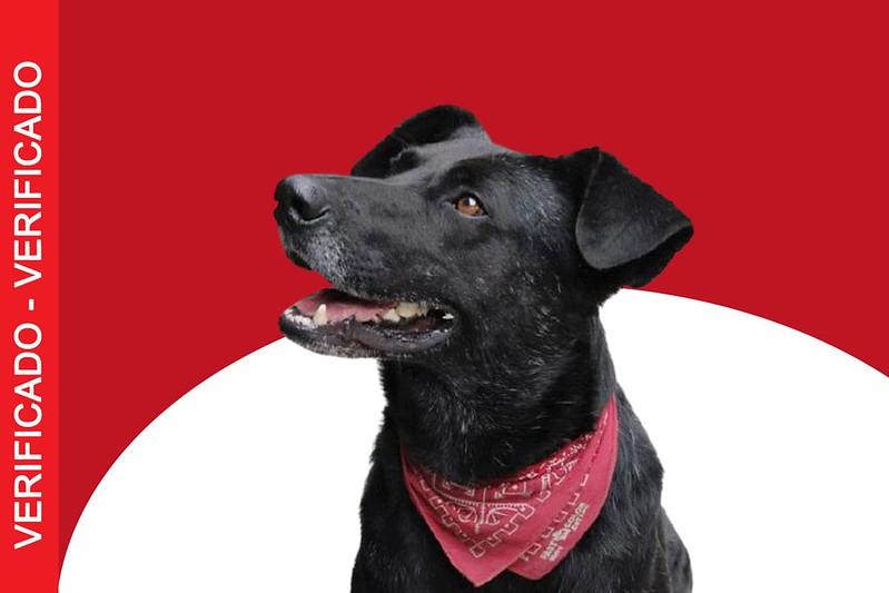 """Revista rusa eligió al """"Negro Matapacos"""" como el perro de la década"""