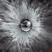 "LROC Image # M1194434063_LR(Mosaic) ""Chappy Crater"""