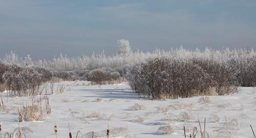 Winter at the Bog
