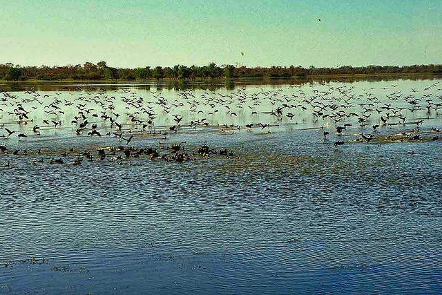 Kakadu National Park wetlands - NT Australia