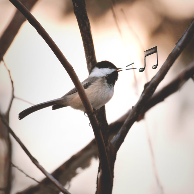 004.365.9 / Sing