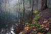 stawy w lesie