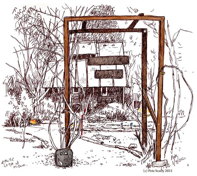 tri co-ops garden UC Davis