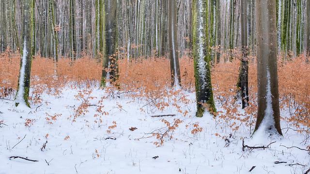 Winter Woodland
