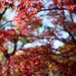 20201205 Nishio Historical Park 1