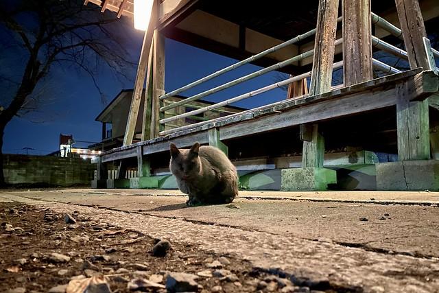 Today's Cat@2021−01−05
