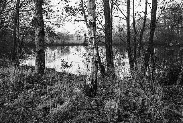 a little lake, deep in the woods
