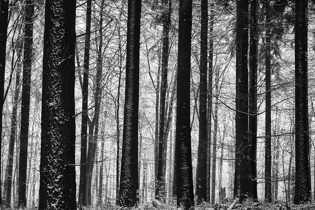 Forest in winter near Posseltslust in Heidelberg