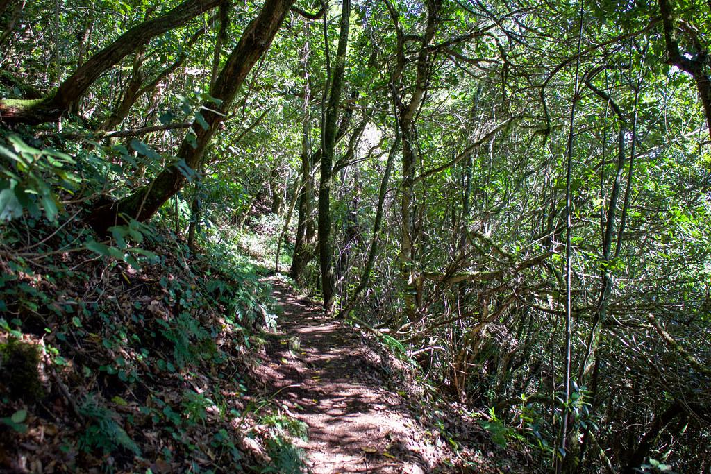 Sendero del Monte de Aguirre en Anaga
