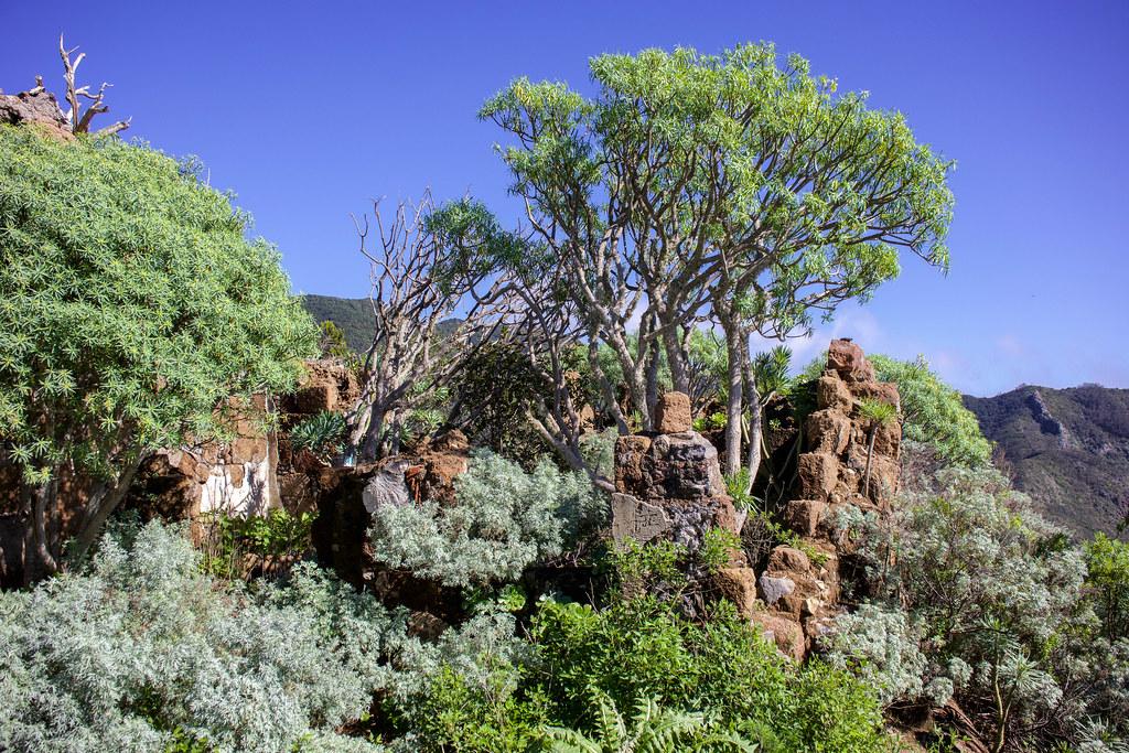 Restos de la casa forestal del Monte de Aguirre en la Asomada