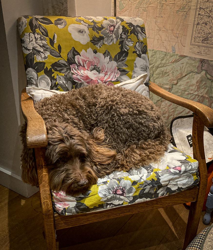 Ewok's Chair