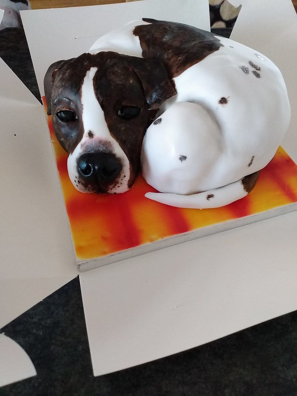 Dog Sid in Cake by Rachel Craig