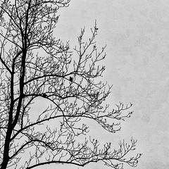 Doves in Winter by John-Pa