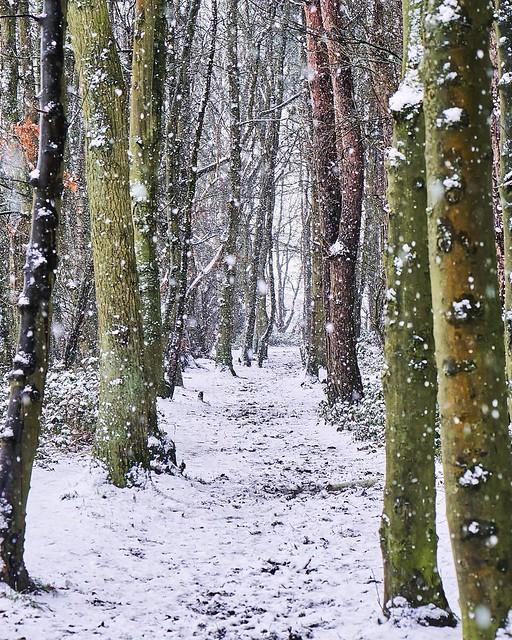 Walking in the snow ❄️ #landscapes #snow #snowing #ice #wood #forest #britishlandscape #britain #uk #uklandscapes #nature #wildlife #weather #naturettl #manualshots #naturepotd #gloriousbritain #ukshooters #nature_perfection #splendid_shotz #autu