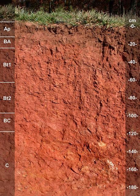 Clifton soil series NC