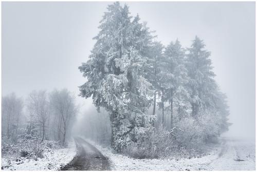 wald wäldchen forest copse forêt eis ice glace snow schnee neige landschaft landscape paysage bäume trees arbres bosquet winter hiver outdoor fotorahmen canon5dmkiii canonef24105mmisf4
