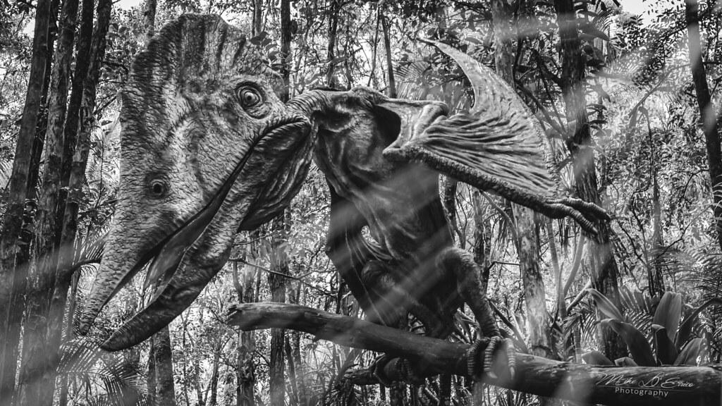 Sighting Of The Dragon