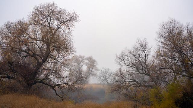 Foggy Wetland