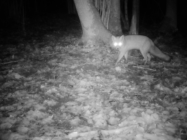 Rajakaamera / Trail camera