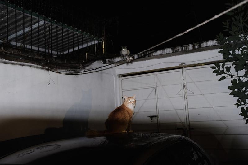 DSCF1678 - Gatos Pardos - México por Ockesaid a.k.a. Joel Lugo