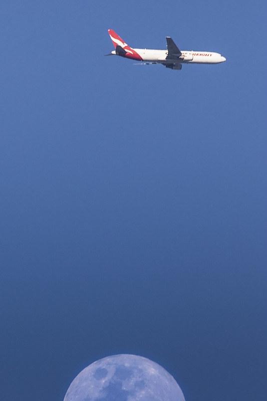 rare_bird-1-weba