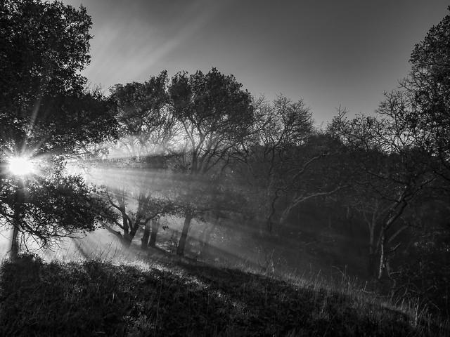 Misty morning sun rays.