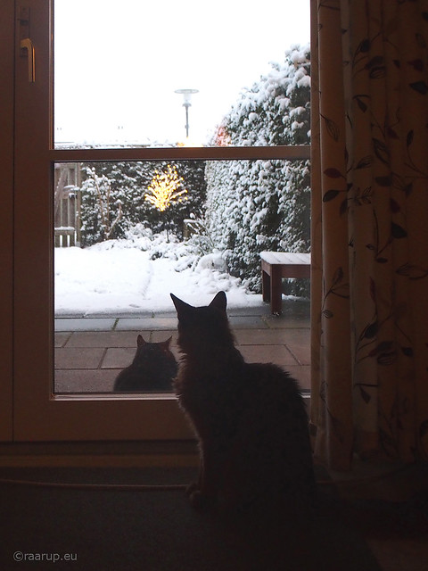 First snow morning