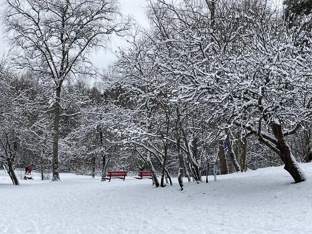 Central Park, Helsinki Style