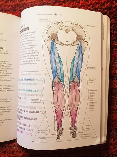 Anatomie-Malen