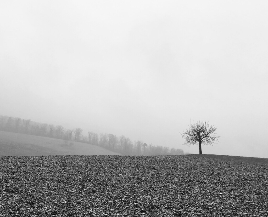 morning mist for a lonesome tree