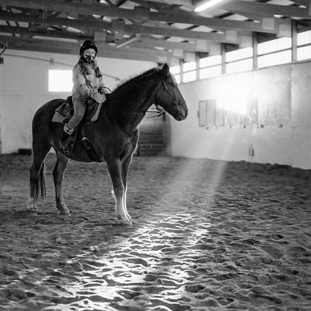 Rays of light with horse