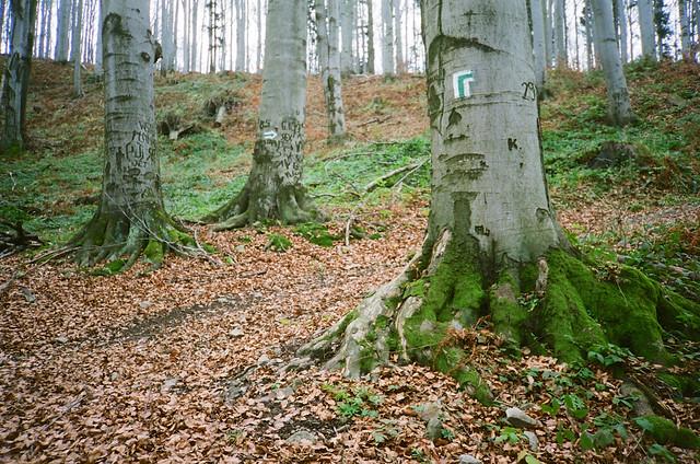 Zielony szlak / Green trail