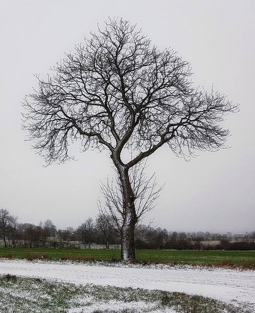 The Three in Winter Mood